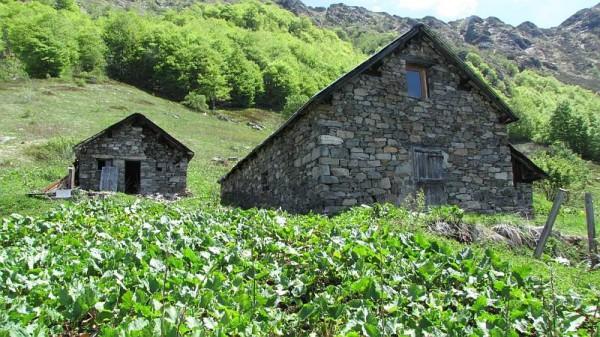 Sentiero Isola di Vocca - Alpe Grossa (Colle di Gavala)
