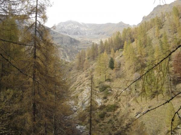 Sentiero Alpe Cascivere di Sopra