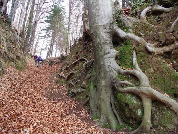 Sentiero Monte San Grato