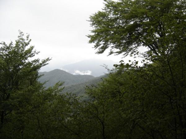 Sentiero Monte Avigno o Navigno